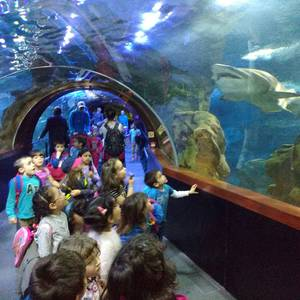 Donostiako Aquariumean